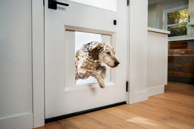 myQ Pet Portal